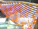 Chiêm ngưỡng chiếc khăn rằn làm từ vàng ròng lớn nhất Việt Nam