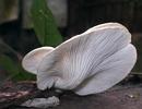 Phát hiện nấm cực hiếm ở Vườn quốc gia Cát Tiên