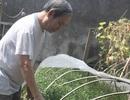 Chuyện ông già bảo thủ nhất làng hoa sống chật vật trên núi tiền