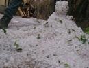 Mưa đá bằng quả chanh đổ xuống Tủa Chùa, Điện Biên