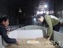 """Mục sở thị """"lò"""" nuôi gián đất ở Bắc Ninh"""