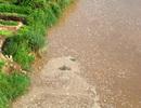 Bọt lạ lại nổi trắng sông Hồng