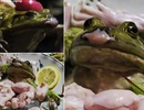 Kinh hãi với món ếch sống tại một nhà hàng ở Nhật