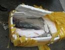 Lật tẩy thủ đoạn tuồn cá trắm Trung Quốc vào thị trường nội địa