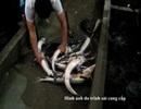Ngăn chặn thủy sản nhập lậu: Cần quản chặt đầu vào