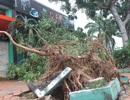 Bão số 4: TP Quy Nhơn mất điện cục bộ, cây xanh đổ la liệt