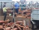 Phát hiện xe chở gỗ trắc trị giá hàng tỷ đồng