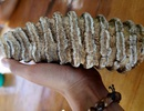 """Nhặt được hàm răng """"khủng"""" hóa thạch khi đi hái nấm"""