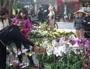 Hoa cảnh Trung Quốc lấn át thị trường hoa Tết