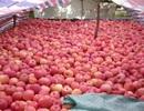 Nhiều lô rau, củ, quả Trung Quốc thiếu an toàn