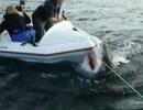 [Video] Con cá mập trắng điên cuồng tấn công đoàn làm phim