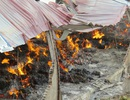 Vụ cháy nhà máy nông sản: Lửa bùng phát trở lại, di dân khẩn cấp