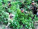 Mở cao điểm tấn công tội phạm ma túy trên các tuyến biên giới