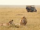 Thú rượt người trên đường du lịch đến Kenya