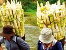 Những đặc sản nổi tiếng ở Yên Bái