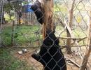 Lên kế hoạch nuôi dưỡng, chăm sóc cho gấu ngựa bị bệnh