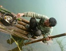 Cá chết phủ trắng thượng nguồn sông Bưởi