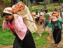Phụ huynh leo dốc gùi gạch xây nhà bán trú cho học sinh