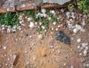 Tiếp tục xuất hiện mưa đá tại Lâm Đồng