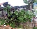 Tp HCM: Nhiều cây xanh bị gió lốc quật đổ
