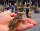 Số phận đáng thương của chim phóng sinh!