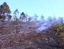 """""""Bà hỏa"""" thiêu rụi 5000m2 rừng"""