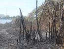 """Người dân bất cẩn khi đốt rác khiến 100m2 """"mảng xanh"""" ven sông Hương cháy rụi"""