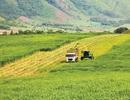 """Đại gia bỏ vốn vào nông nghiệp, nhà nông sẽ """"cùng thắng""""?"""
