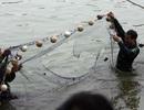"""Đề xuất dùng lưới bắt cá ngừ để """"vây bắt"""" cụ Rùa"""