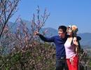 Đón Valentine cùng hoa xuân Sa Pa