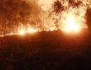 Thanh Hóa: Nhiều nghi vấn trong các vụ cháy rừng ở huyện Tĩnh Gia
