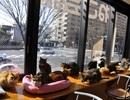 Ghé thăm quán cà phê mèo hoang nổi tiếng tại Kyoto