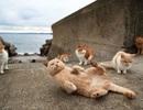 Thăm thiên đường của loài mèo ở Nhật Bản
