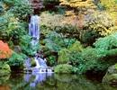 Dạo quanh khu vườn Nhật tuyệt đẹp trên đất Mỹ