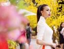 Trà Ngọc Hằng diện áo dài dạo phố Xuân rực rỡ