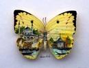 Tuyệt phẩm tranh nghệ thuật trên…cánh bướm