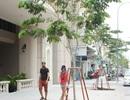 TPHCM yêu cầu thay cây xanh trên phố đi bộ Nguyễn Huệ