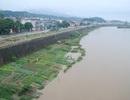 Nước sông Hồng đột ngột dâng cao trong ngày rét đậm