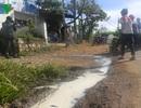 Người dân đổ hàng nghìn lít sữa bò tươi ra đường