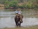 Dịch vụ cưỡi voi vượt sông Sêrêpôk hút du khách dịp nghỉ lễ