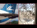 Máy bay Nga không thể cất cánh vì bị ong vây kín