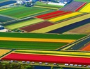 Vẻ đẹp diễm lệ của những thảm hoa tulip vào mùa