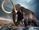 Tranh cãi chuyện hồi sinh các loài đã tuyệt chủng