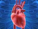 Tim phổi và máu có biết ngửi?