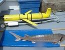 Rô bốt dưới nước phát hiện cá tầm đang bị nguy hiểm