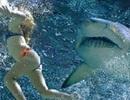 """Đồ bơi giúp người """"tàng hình"""" trước cá mập"""