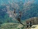 """""""Vùng núi phía Bắc Việt Nam là điểm đến ý nghĩa trên thế giới"""""""