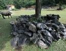 Cách sử dụng đá độc đáo để bảo vệ môi trường