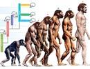 Giải mã những tiến hóa của con người