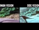 Đọ khả năng nhìn giữa người với động vật